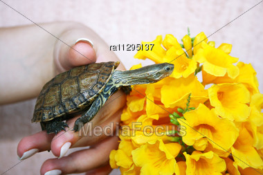 Turtle In Woman Hand Stock Photo