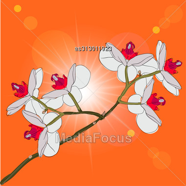 Twig Blossoming Orchids On A Background Stock Photo