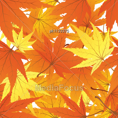 Twisted Row Of Autumn Maples Leaves. Stock Photo