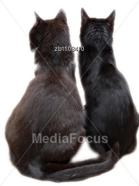 Two Black Cats Viewed From Back Sitting On Floor Stock Photo