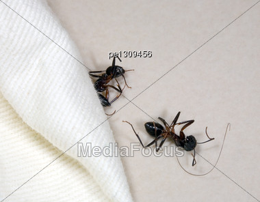 Two Dead Ants Stock Photo