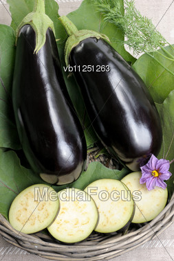 Two Eggplants Of Black Colour In A Basket On Leaves And The Cut Slices Stock Photo