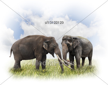 Two Elephants On The Grass Against Of Sky Stock Photo