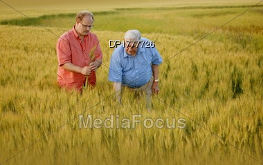 Two Men Looking At The Crop Stock Photo