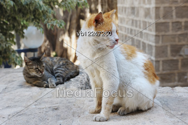 Two Stray Cats Around The House In Jerusalem Stock Photo