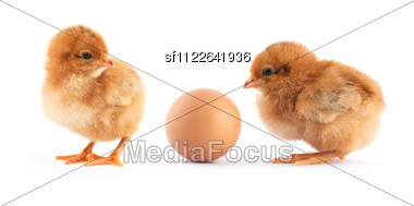 Two Yellow Small Chicks With Egg Stock Photo