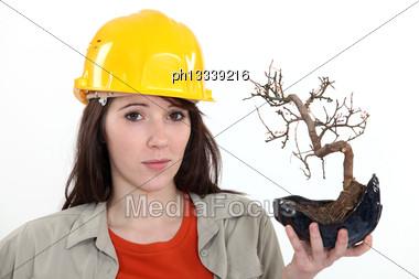 Uncertain Tradeswoman Holding Up A Bonsai Plant Stock Photo