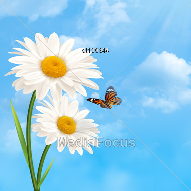 Under The Blue Skies. Abstract Natural Backgrounds With Daisy Flowers Stock Photo
