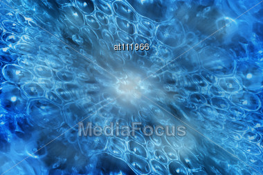 Underwater Scene With Bubbles, A Sight From Depth Of Ocean Stock Photo