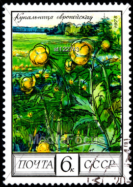 "USSR - CIRCA 1975: A Postage Stamp Shows Image Of A Globe Flower With The Designation ""Trollius Europaeus"", Circa 1975 Stock Photo"
