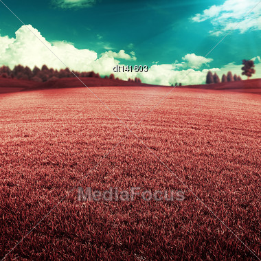 UV Landscape, Abstract Summer Backgrounds With Violet Grass Under Blue Skies Stock Photo