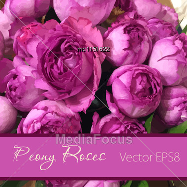 Vector Card With Peony Roses. Wedding, Greeting Or Birthday Card Design Stock Photo