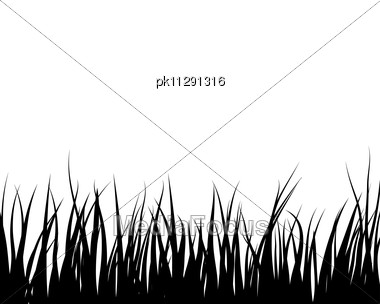 Grass Silhouettes Backgrounds Stock Photo