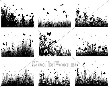 Grass Silhouettes Backgrounds Set. All Objects Are Separated. Stock Photo