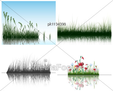 Grass Silhouettes Backgrounds Set With Reflection In Water. All Objects Are Separated Stock Photo