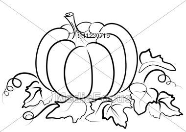 Royalty free stock photo pumpkin vegetable fruit