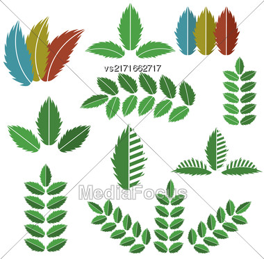 Vector Set Of Green Leaves Isolated On White Background Stock Photo