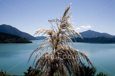 View Marlborough New Zealand South Island Ocean Stock Photo