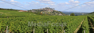 Vines During The Harvest Of The Vineyards Of Sancerre Stock Photo