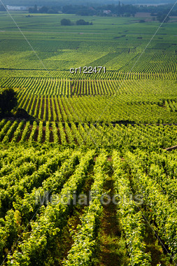Vineyards In Gevrey Chambertin Burgundy France Stock Photo