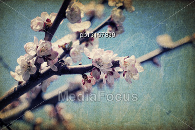 Vintage Apple-tree Flowers At Spring Stock Photo