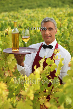 Waiter Serving White Wine In A Vineyard Stock Photo