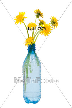Water Bottle And Dandelions Stock Photo