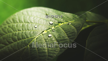 Water Drop On The Leaf Surface, Abstract Natural Background Stock Photo