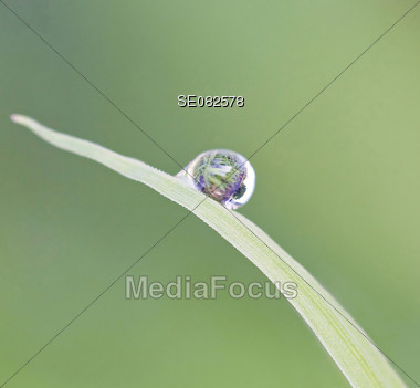 Water Droplet on a Blade of Grass Stock Photo