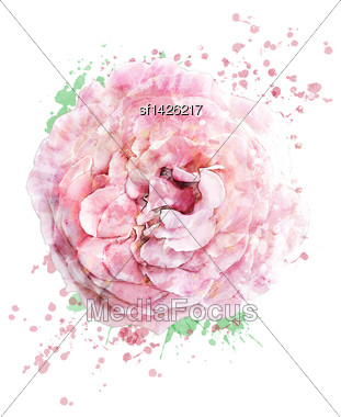 Watercolor Digital Painting Of Pink Rose Stock Photo