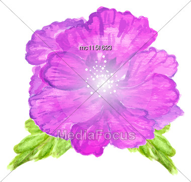 Watercolor Painted Vector Hibiscus. Tropical Flower. Violet Vector Flower Stock Photo