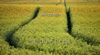 Wet Tractor Tire Tracks In Saskatchewan Field Stock Photo