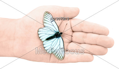 White Butterfly With Black Stripes And Volant In A Baby Hand Stock Photo