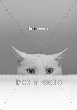 White Cat Hiding Behind The Bed Stock Photo