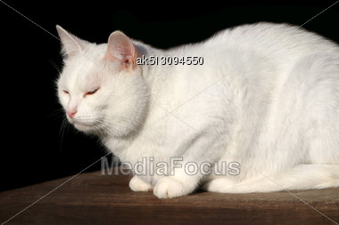 White Cat Sitting On The Wooden Stairs In The Village Stock Photo