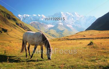 White Horse Mirroring In Water Stock Photo