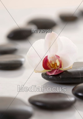 White Orchid On Hot Stones Stock Photo
