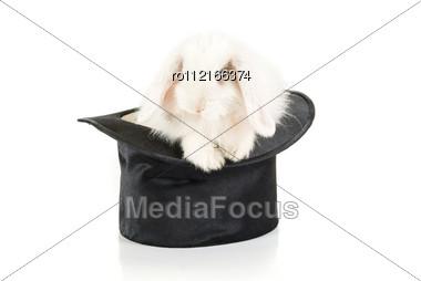 White Rabbit At Black Hat - Symbol Of 2011 New Year Stock Photo