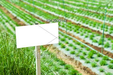 Whitebord Lablel In Garden In Daylight Time Stock Photo