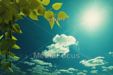 Wide Blue Skies, Birch Foliage And Sun, Abstract Natural Backgrounds Stock Photo