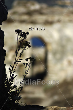 Wild Flower Silhouette Against Blurred Wall Of Methoni Castle At Sunny Summer Day Stock Photo