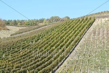 Wine Field Under The Sun, Rheinland-Pfalz, Germany Stock Photo
