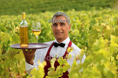 Wine Waiter In The Middle Of Vineyards Stock Photo