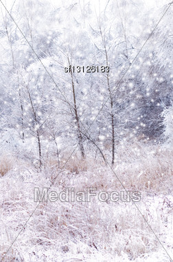 Winter Background With Trees And Snow Stock Photo
