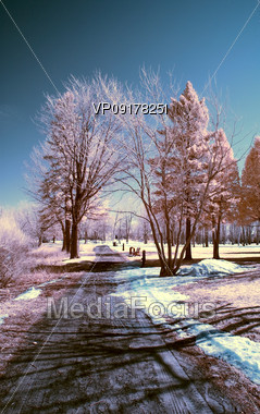 Winter Scene Shot with an Infrared Filter Stock Photo