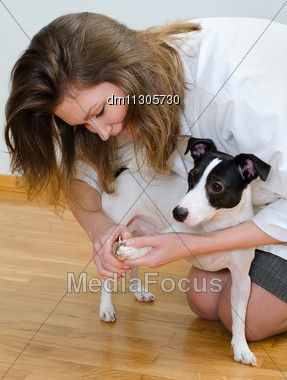 Woman Cutting Her Small Dog Claws Stock Photo