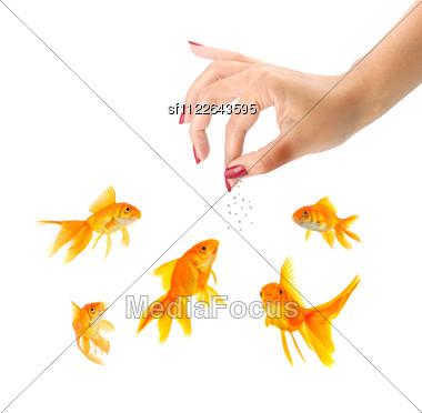 Woman Feeding Goldfishes Isolated Stock Photo