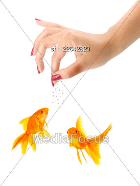 Woman Feeding Goldfishes Stock Photo