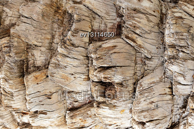 Wood Texture Of Tropical Tree Stock Photo