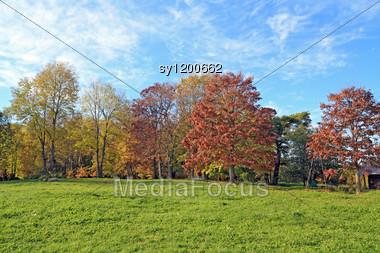 Wooden Buildings Amongst Autumn Tree Stock Photo